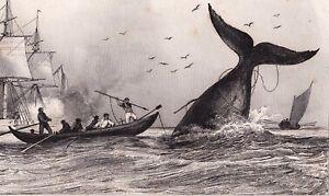 Gravure-XIXe-Chasse-a-la-BALEINE-Whaling-Whale-1848