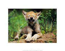 ART WOLFE Simple Pleasures poster stampa d'arte immagine 28x36cm-SPEDIZIONE GRATUITA