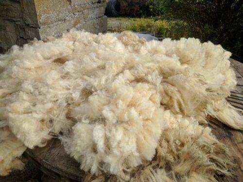 Warm and versatile,Min weight1.4 kg. Organic Sheep Fleece Native UK Hill Breed