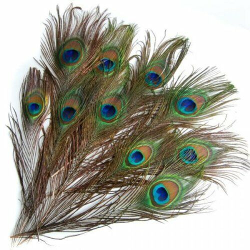 20 pcs Artificial peacock feathers w Eyes Z6P7 K7Y5