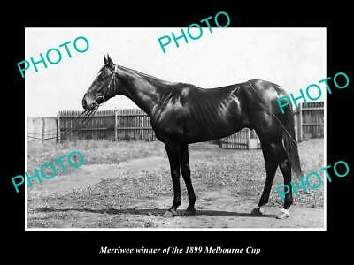 Collectibles Intellective Old Large Historic Horse Racing Photo Of 1899 Melbourne Cup Winner Merriwee Agreeable To Taste