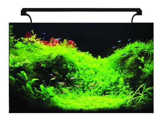AquaNano 80 Glass Aquarium 130L Complete Stunning Fish Tank Set LED Filter