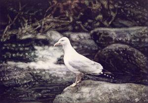 Herring-Gull-POSTCARD-Seagull-Bird-Steve-Greaves-Painting-Art-Nature-Card-Print