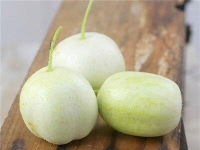 10 Cucumber Seeds CRYSTAL APPLE Heirloom Vegetable