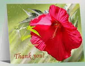 REDUCED-12-Greeting-Note-Cards-Beautiful-Red-Hibiscus-Handmade