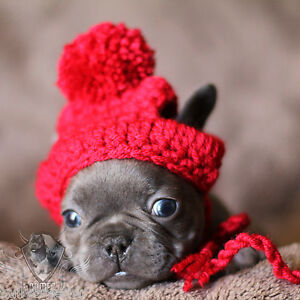 06e8c8d9475 Image is loading Handmade-Crochet-Pet-Clothes-Small-Dog-Breed-French-