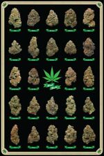 BEST BUDS - WEED POSTER - 24x36 MARIJUANA SMOKING POT 10270