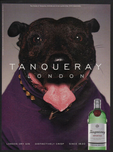 1999 Cute PIT BULL TERRIER Dog Purple Sweater TANQUERAY London Gin VINTAGE AD