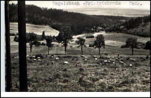 Engelsbach-Thueringen-DDR-Postkarte-1963-Thueringer-Wald-Panorama-Weide-Kuehe