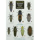 Guide to the Ladybird Larvae of the British Isles by Peter Brown, Richard F. Comont, Remy Poland, Helen Roy (Fold-out book or chart, 2012)