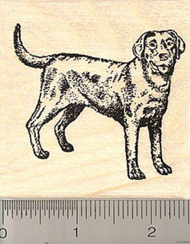 Black Labrador Retriever Rubber Stamp H7112 WM lab