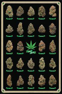 Best Buds Marijuana Strains Id Chart Poster 61x91cm