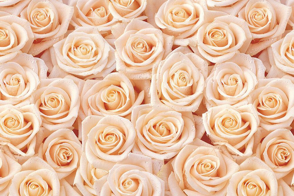 Fototapete Rosen Beige Muster - Kleistertapete oder Selbstklebende Tapete