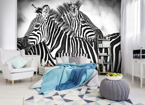 Vließ Fototapete Tapete Wandbild Zebra Weiss-Schwarz 310159/_VEMVT