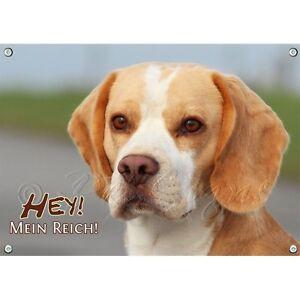 Dog Shield - Beagle 1a bouclier en métal