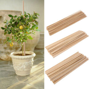 Plant Care, Soil & Accessories Plant Ties & Supports 60cm