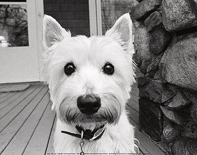 TERRIER DOG ART PRINT - Rosie by Kim Levin Cute Puppy Animal Poster 11x14