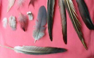 Naturel-Plumes-x200-Free-Fallen-grand-petit-colore-Gris-Blanc-UK-Noir