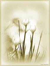 PHOTO COMPOSITION NATURE FLOWER PLANT WHITE PETAL STEM POSTER PRINT BMP10739