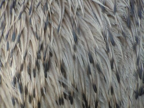 50 EMU FEATHERSVarious Lengths Wedding, Jewelry, Fly Tying, Costumes