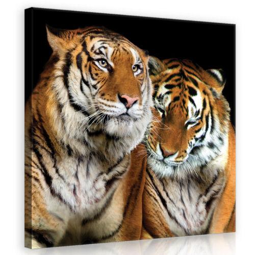 CANVAS Wandbild Leinwandbild Bild  Freund Tiger Katze Tier Liebe   3FX10173O5