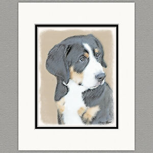 Details About Bernese Mountain Dog Puppy Original Print 8x10 Matted To 11x14