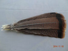 12 #1 ADULT EASTERN WILD TURKEY TAIL FEATHERS/ FLY-TYING