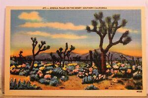 California CA Southern Joshua Palms Desert Postcard Old Vintage Card View Postal