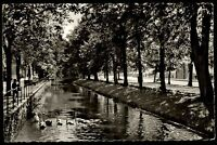 Detmold alte AK 1963 Partie an der Baum Allee Uferpartie Fluss Schwäne Botanik