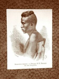 Un-domestico-siamese-nel-1863-Siam-o-Thailandia