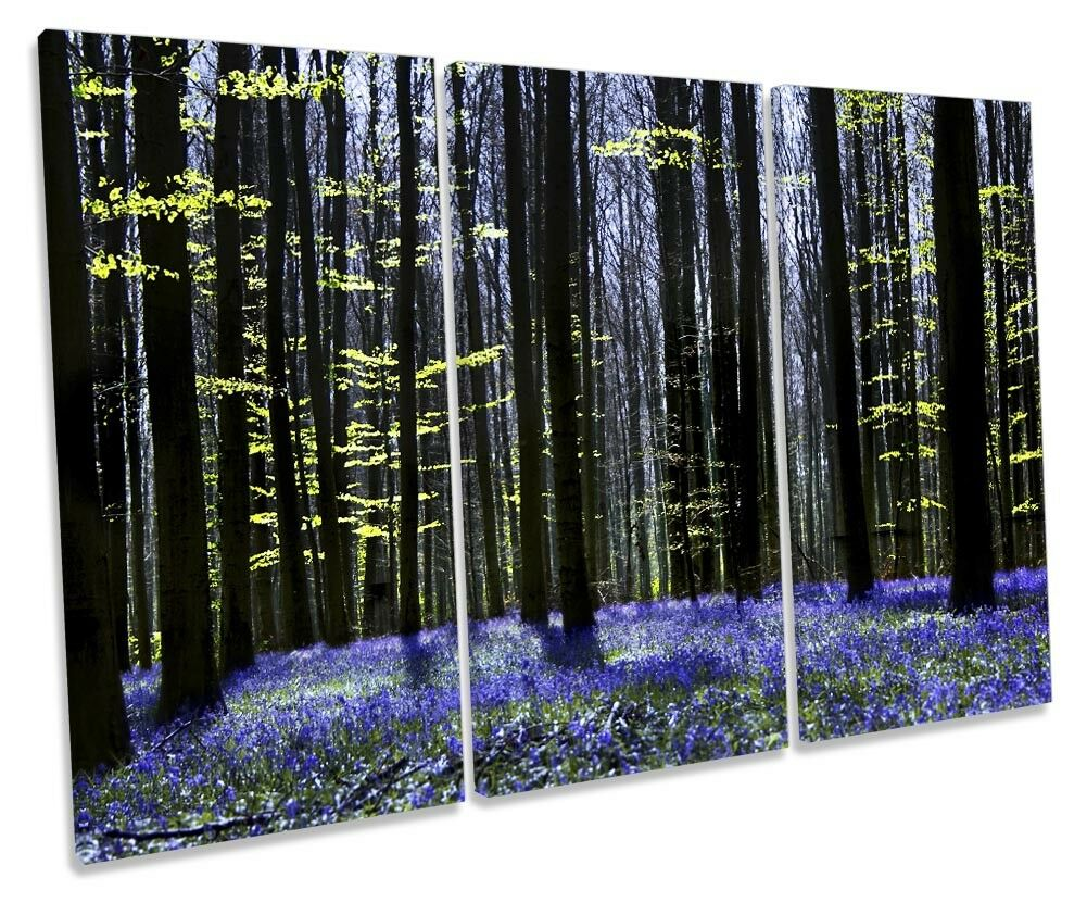 Forest Trees Blossom Dark Picture TREBLE toile WALL ART Print