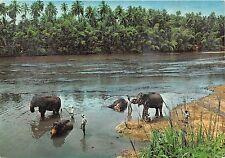 BG9492 elephant bath katugastota kandy  ceylon sri lanka