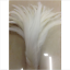 Wholesale-10-2000-Pcs-Beautiful-Rooster-Tail-Feathers-12-14-Inches-30-35cm thumbnail 13