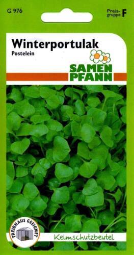 Winterportulak Portulak Samen vitaminreicher Gemüseportulak Kräuter Salat