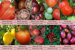 Tomatensamen-10-alte-Russische-Sorten-Samen-Set