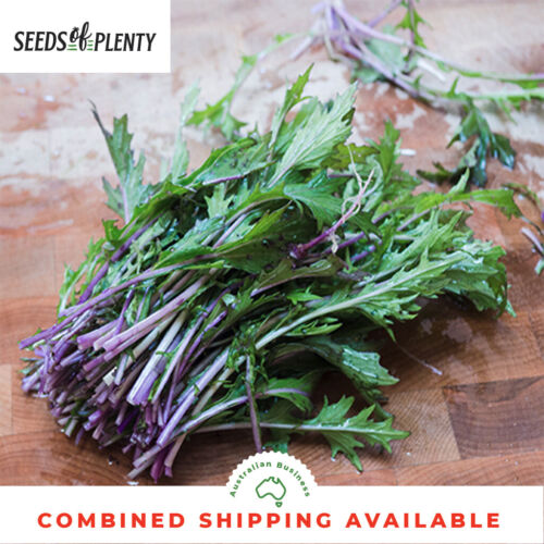 Purple RARE Asian Greens MIZUNA 150 Seeds Hybrid