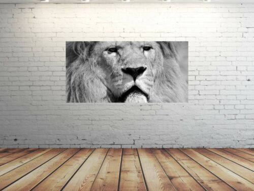 HD Glasbild EG4100500837 LÖWE AFRIKA S//W 100 x 50 cm Wandbild TIERE
