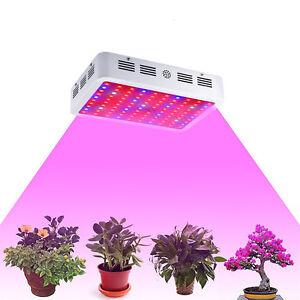 1000W-Double-Chip-LED-Grow-Light-Lamp-Full-Spectrum-for-Medical-Indoor-Plant-Veg
