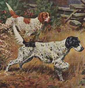 English-Setter-Vintage-Color-Dog-Print-MATTED