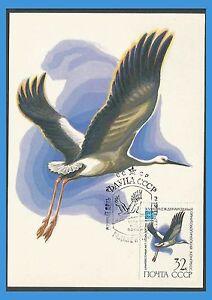 Russie-URSS-1982-4918-CM-Oiseaux-Cigogne-orientale