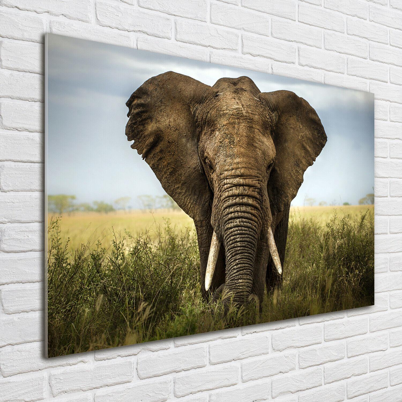 Acrylglas-Bild Wandbilder Druck 100x70 Deko Tiere Elefant Savanne