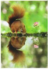 Ansichtskarte: Spieglein, Spieglein: Eichhörnchen trinkt - squirrel - Ècureuil