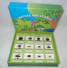 12 BUG Insect Collection Box Set 12 clear blocks Real Specime Teaching Aid