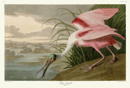 321 Roseate Spoonbill John James Audubon Double Elephant Fine Art Print Giclee