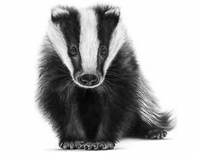 Badger 130 Small or 48 Large Sticky White Paper Stickers Labels NEW