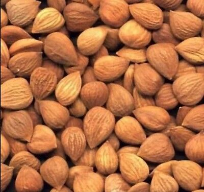 1 Pound Organic Bitter Raw Apricot Kernels Seeds Bonus 40 PAGE Info Seed Kernel
