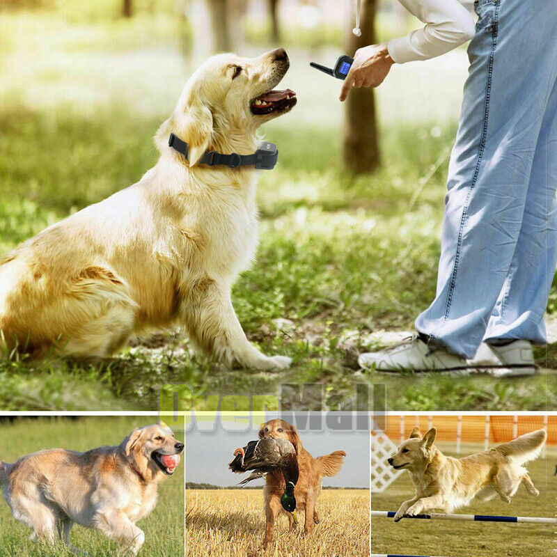 1000 FT Dog Training Shock Collar - Waterproof With Recharegable Battery