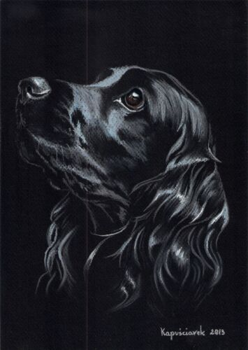 Black  Cocker  Spaniel ***   A4  LIMITED   PRINT #  50