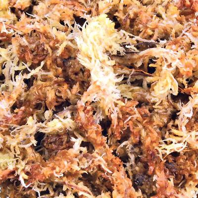 Musgo de Sphagnum Vivero Sustrato Para Terrario Húmedo Tropical 4.5 Litro