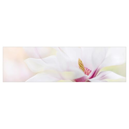 Küchen-Rückwand Zarte Magnolienblüte Panorama Spritzschutz Klebe-Folie geklebt